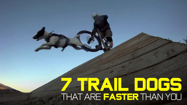 7 Trail Dogs That Are Faster Than You