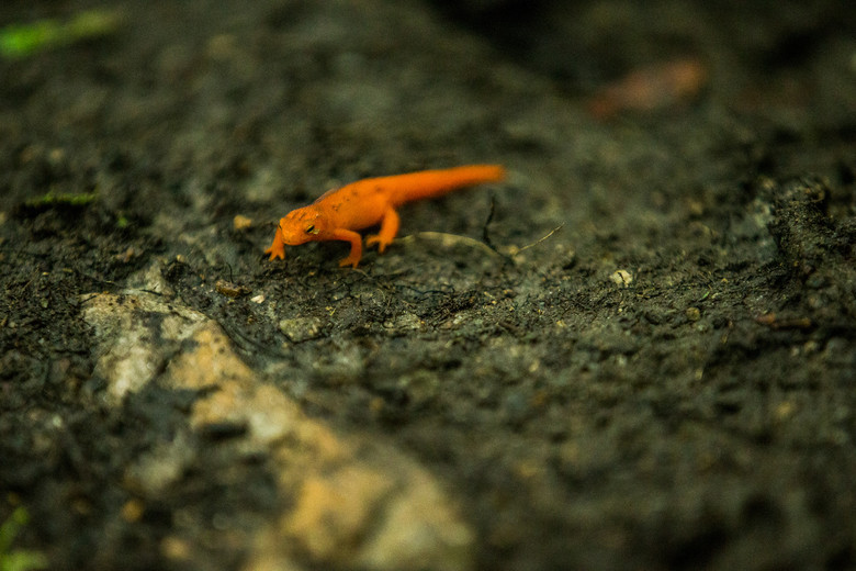 The Newt Class is first off tomorrow, so this dudette was checking lines and scoping the rocks closely.