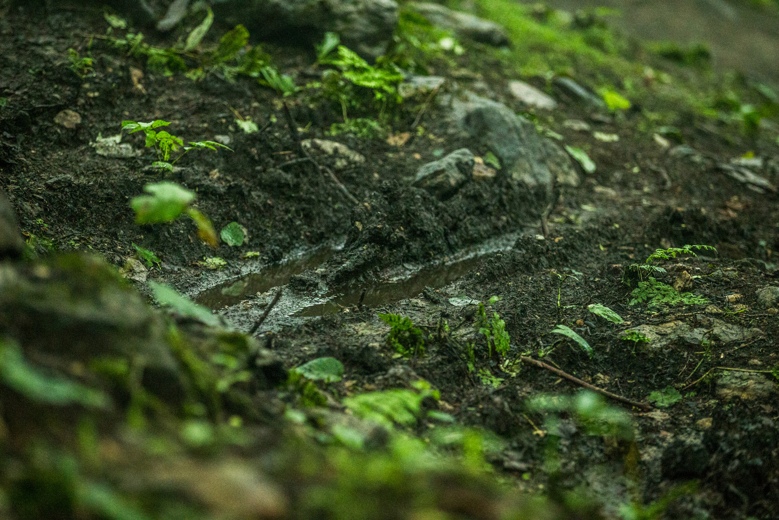 Ruts, rocks, mud, and green leaves on track - it's all here at Killington.