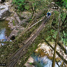 C138_root_bridge_1top