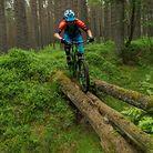 C138_dsc_0711_are_stokk_i_skotske_skogen_foto_johanwildhagen