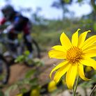 C138_sunflower_small