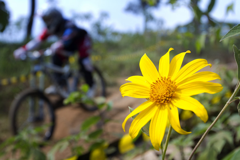 Sunflower - Andre Palmer - Mountain Biking Pictures - Vital MTB