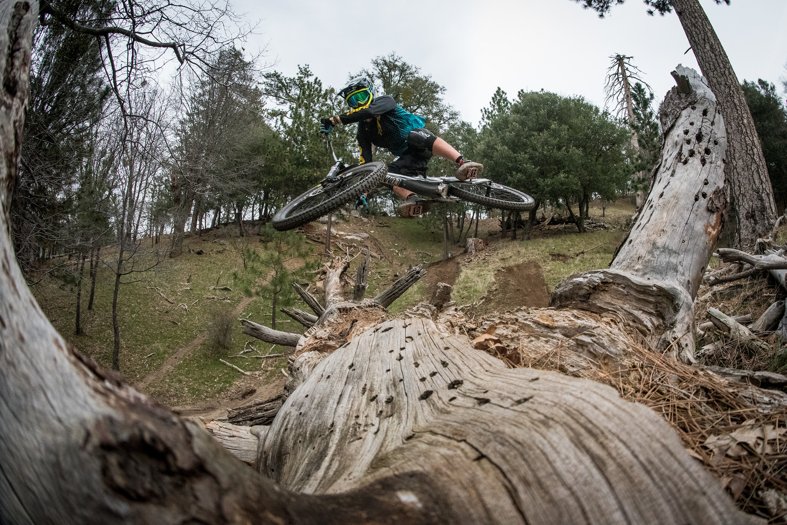 Luca Jumping a Tree - FredLikesTrikes - Mountain Biking Pictures - Vital MTB
