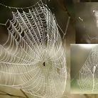 C138_webs