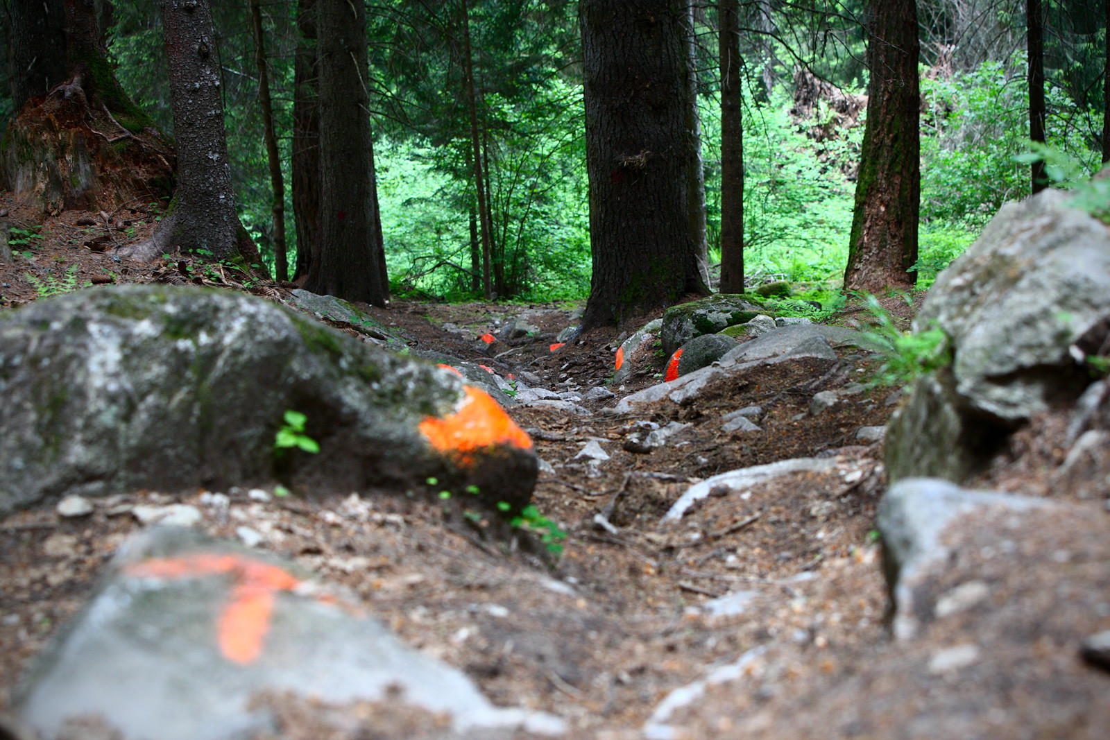 Ever-Changing Course Conditions - 2012 UCI World Cup, Val di Sole Day 1 - Mountain Biking Pictures - Vital MTB