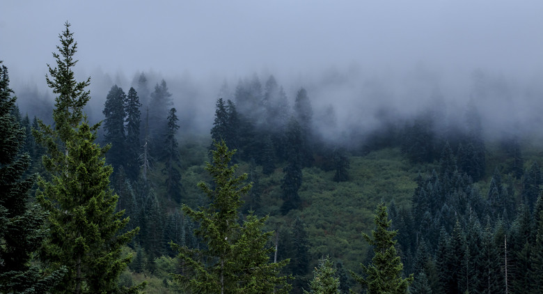 Oregon Enduro, Cold Creek - 2014 Oregon Enduro, Cold Creek - Mountain Biking Pictures - Vital MTB