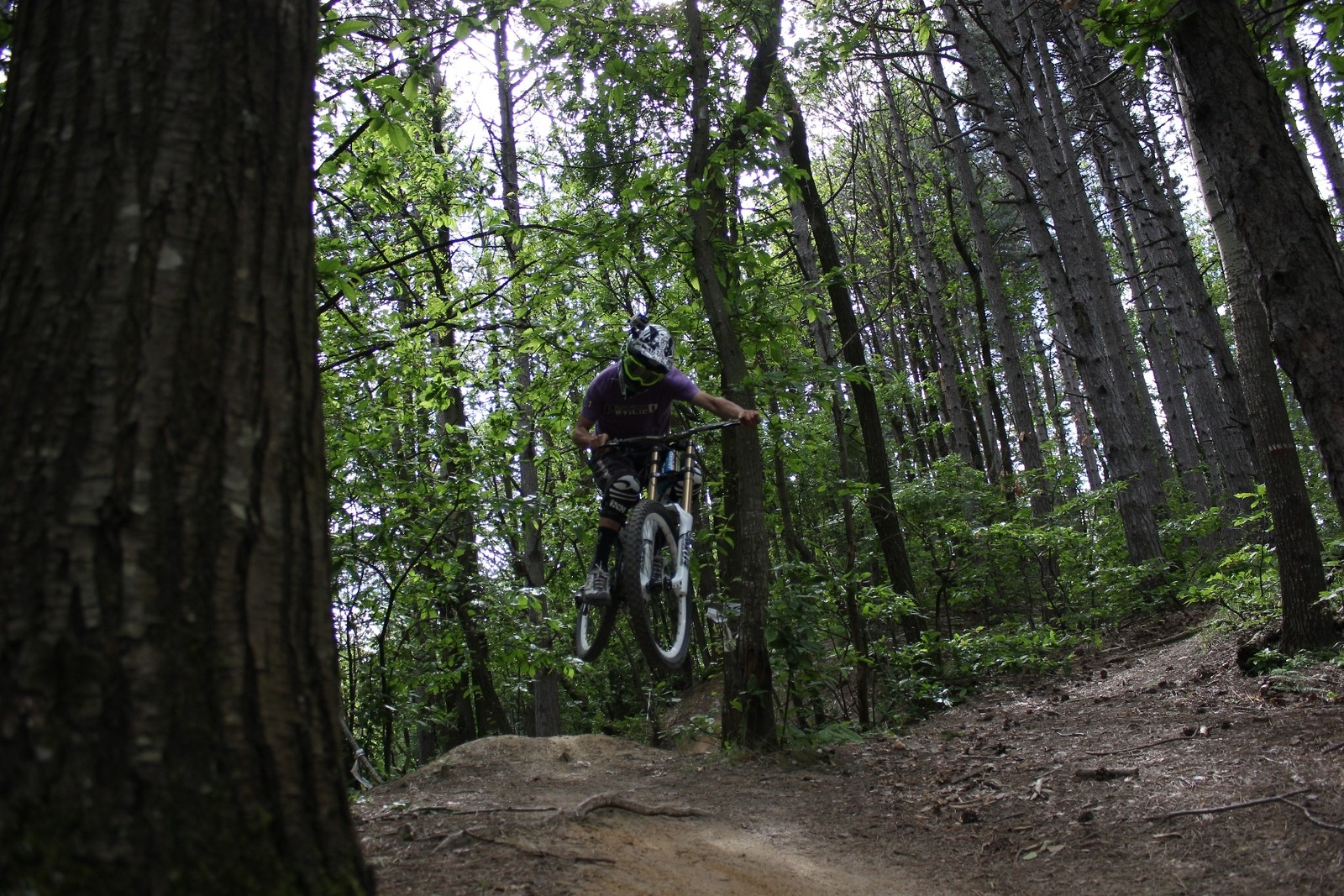 grammyx pinewood - Grammyx - Mountain Biking Pictures - Vital MTB