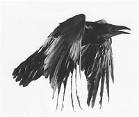 S200x600_raven