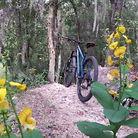C138_bike_flowersst_2