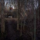 C138_no_hander_at_the_dark_forest