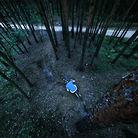 C138_gabriel_drzewovit