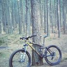 C138_kona_bass_woods