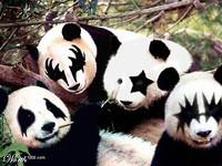 S200x600_kiss_pandas