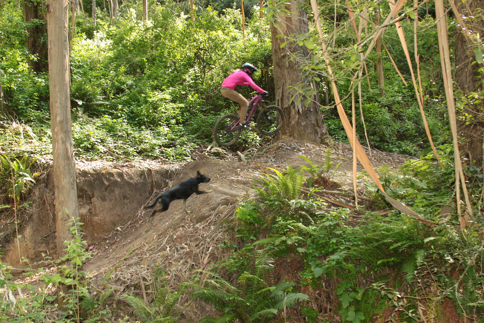 Stepping it-Up with Sarah-Dog - lindsay - Mountain Biking Pictures - Vital MTB