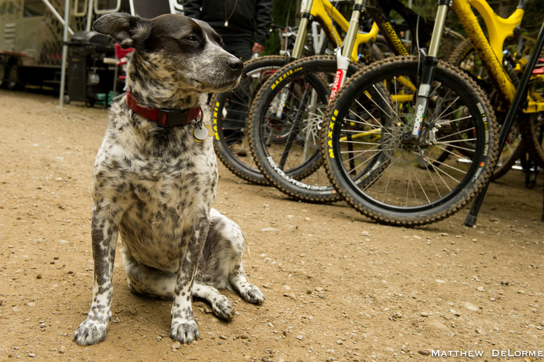 Pit Dog - Port  Angeles Day Four - Mountain Biking Pictures - Vital MTB