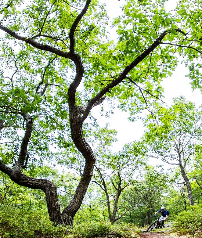 The Tree x2 - jparker - Mountain Biking Pictures - Vital MTB