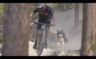 Addie The Dusty DH Dog