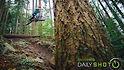 C124x70_turndown_tree_spot
