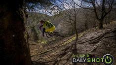 Tucking Under the Tree - Daily Shot