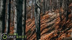 Autumn Rides - Daily Shot