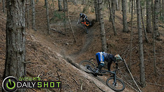 Double Roost - Daily Shot