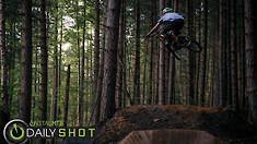 Forest Fun - Daily Shot