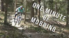 One Minute of Mobbing a Mondraker