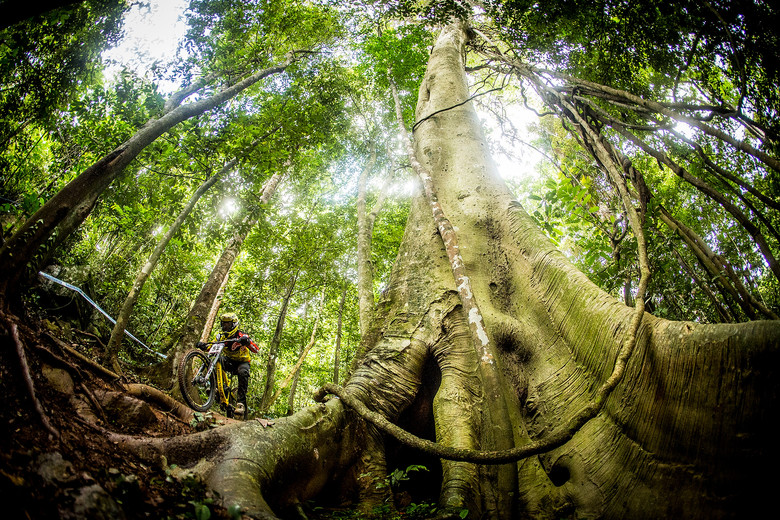 Mick on the World Cup course in Smithfield MTB park. A tropical rain forest DH track like nowhere else in the World.