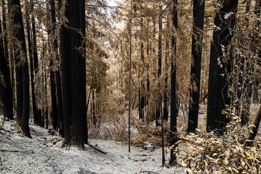 A peek at the charred landscape.