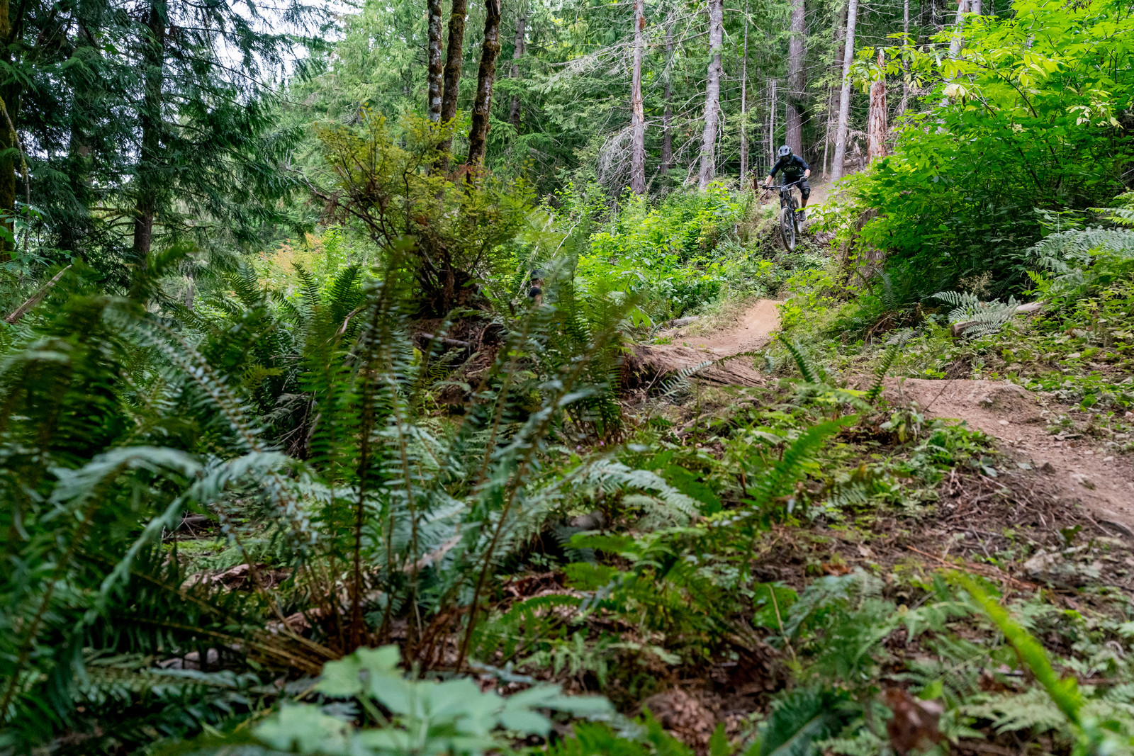 Even though it was a dry and dusty race.... the PNW forest is still lush and green.