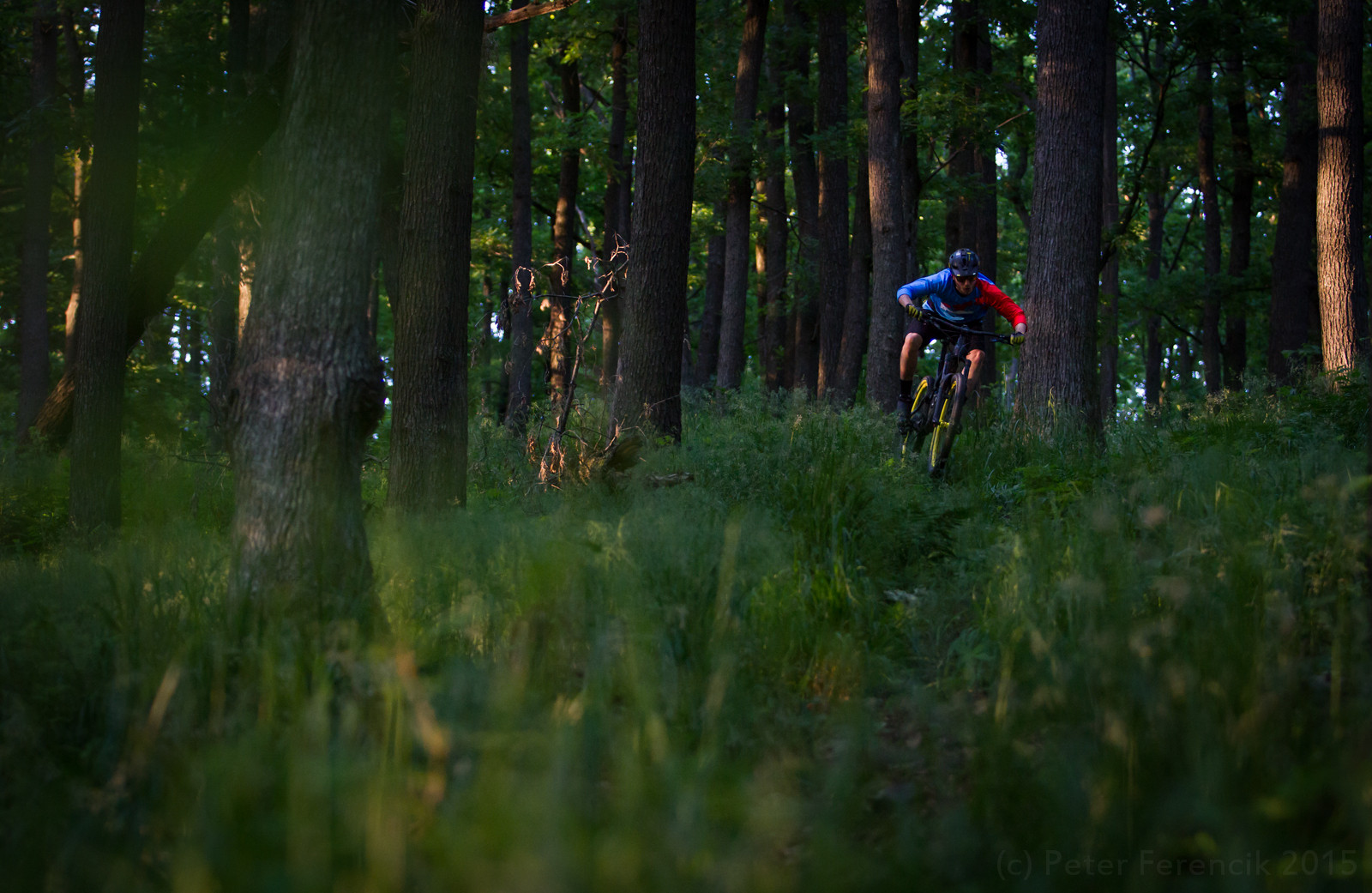 in the woods - PeterFPhotography - Mountain Biking Pictures - Vital MTB
