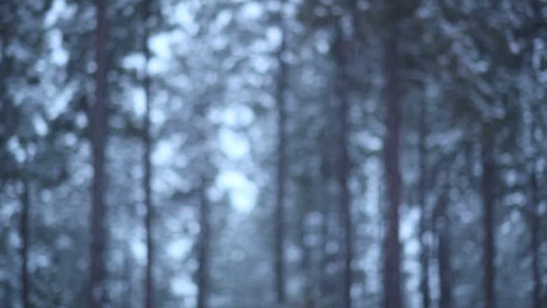 Video: Beating Winter