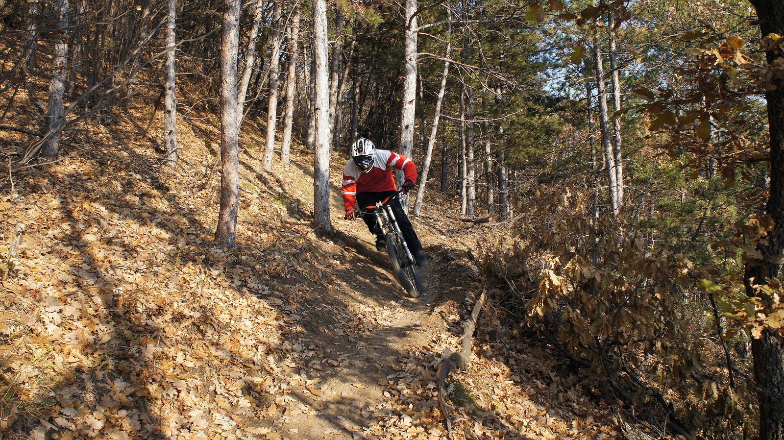 forest fun - k.raichev - Mountain Biking Pictures - Vital MTB