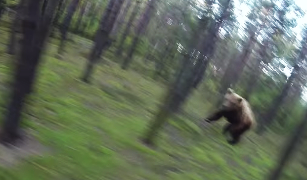 Man Gets Chased by a BEAR! Every Mountain Biker's Worst Nightmare