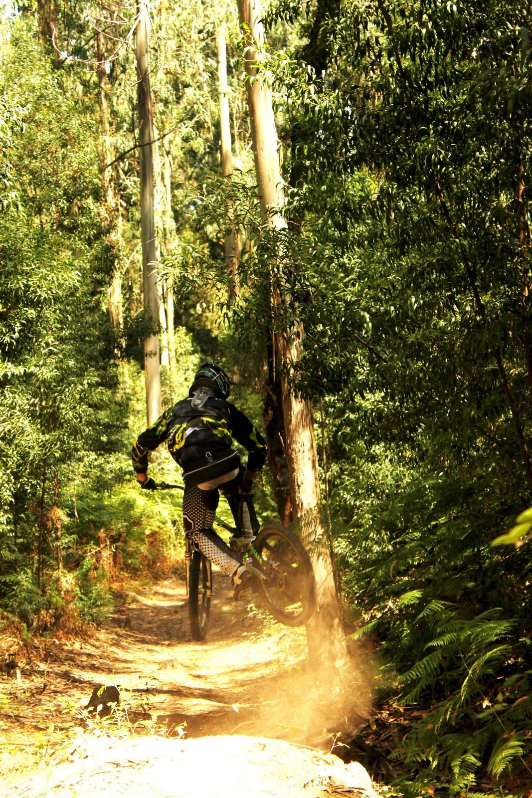 Whip - DoubleCrownKing - Mountain Biking Pictures - Vital MTB