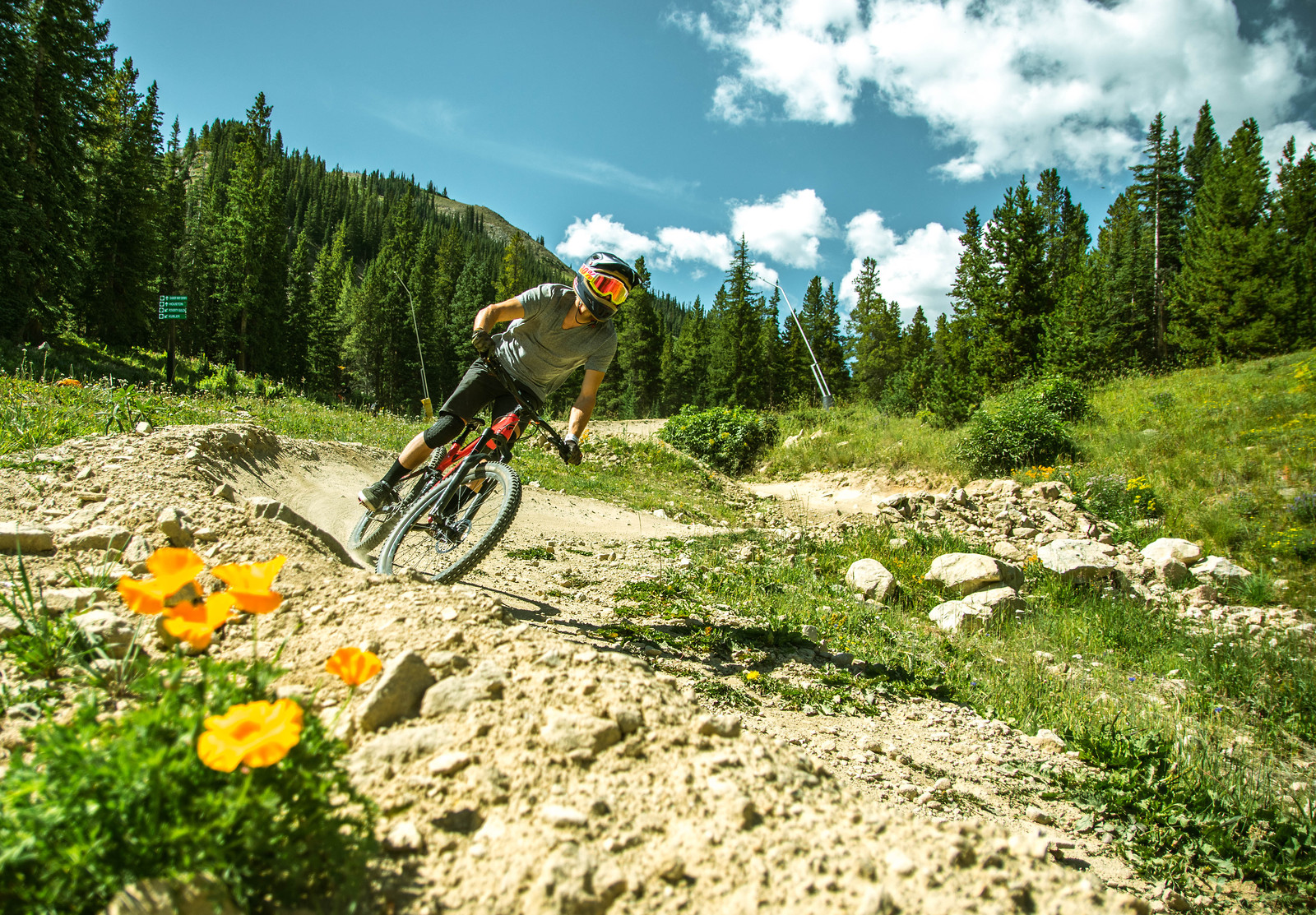 Alpine berms on offer - carbonmsc - Mountain Biking Pictures - Vital MTB