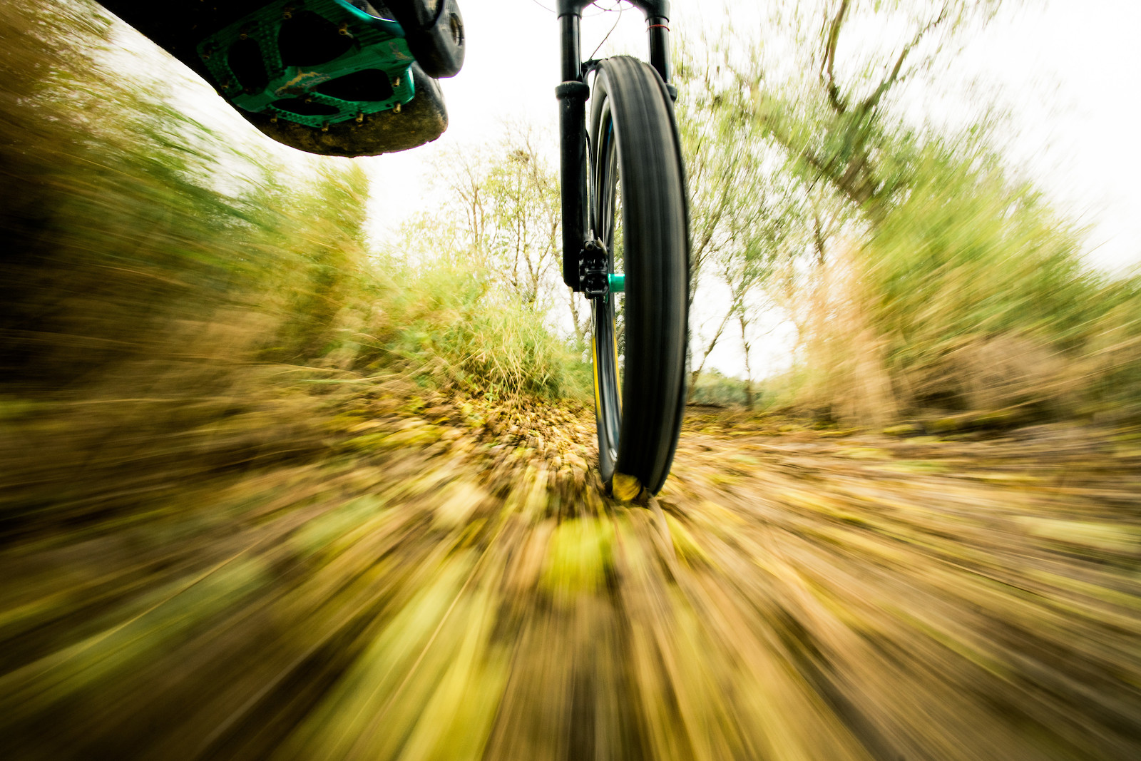 Trails paved with gold leaf - carbonmsc - Mountain Biking Pictures - Vital MTB