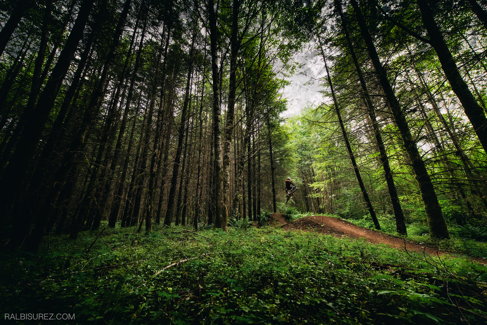 Forest Style - rooshmoo - Mountain Biking Pictures - Vital MTB