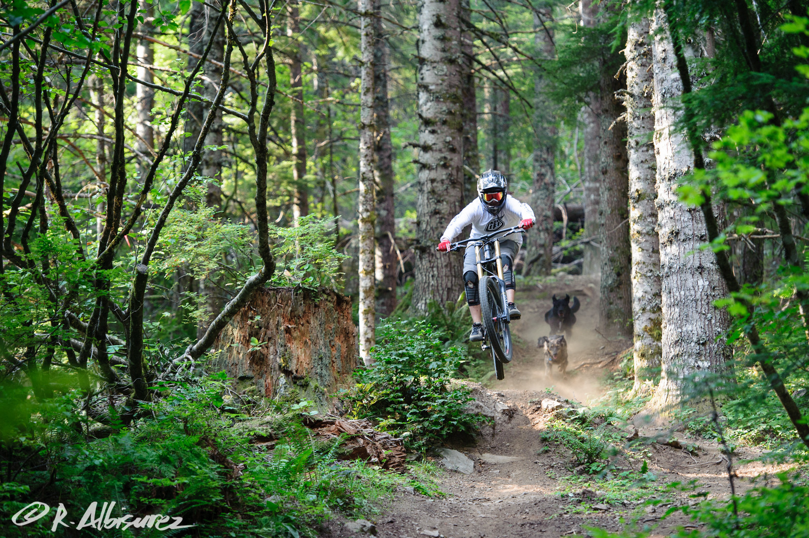 Shred Puppy Heaven - rooshmoo - Mountain Biking Pictures - Vital MTB