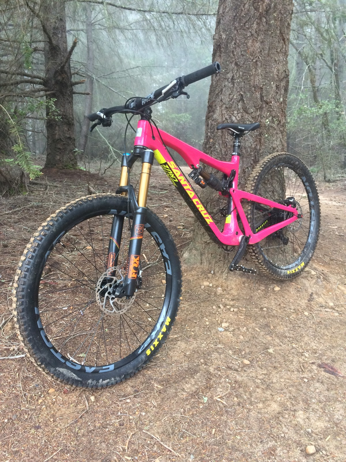 The Pink Lady - Santa Cruz Bronson