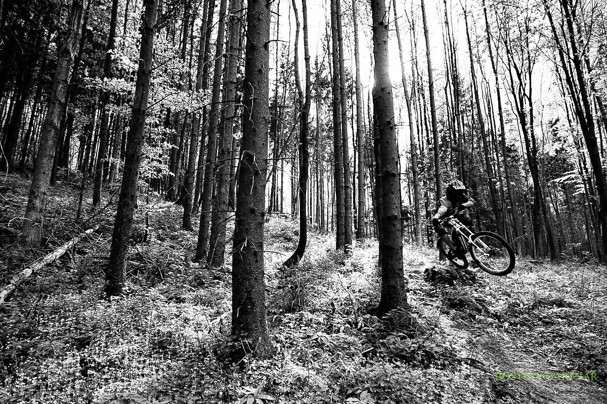 Summer forest - Bostjan - Mountain Biking Pictures - Vital MTB