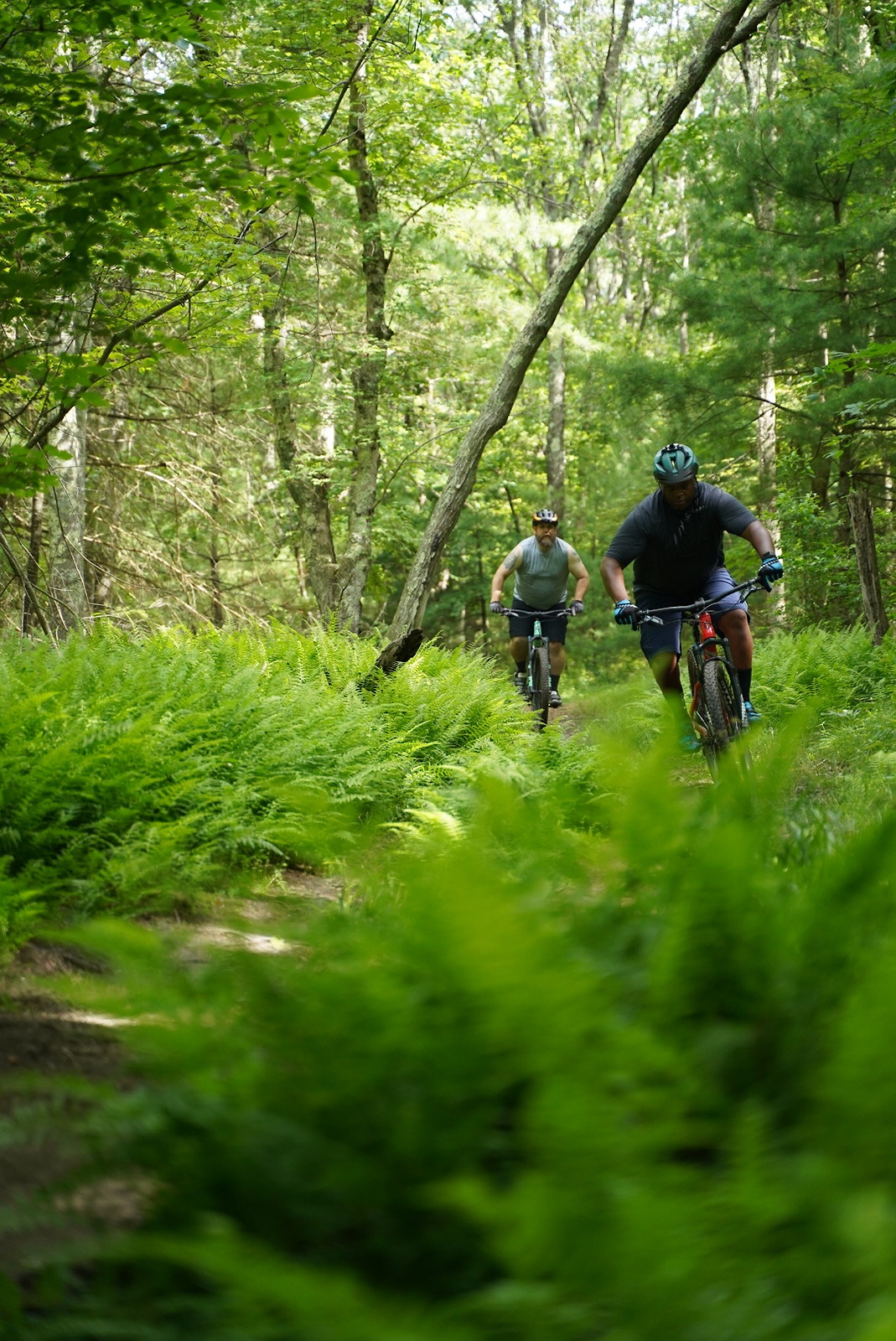 Fern Gully - Lucent - Mountain Biking Pictures - Vital MTB