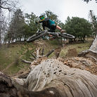 If a Luca Shreds Alone in the Woods...