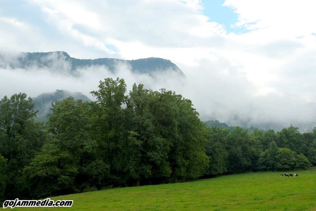 The Drive - US Route 221 and Pisgah National Forest - gojammedia - Mountain Biking Pictures - Vital MTB