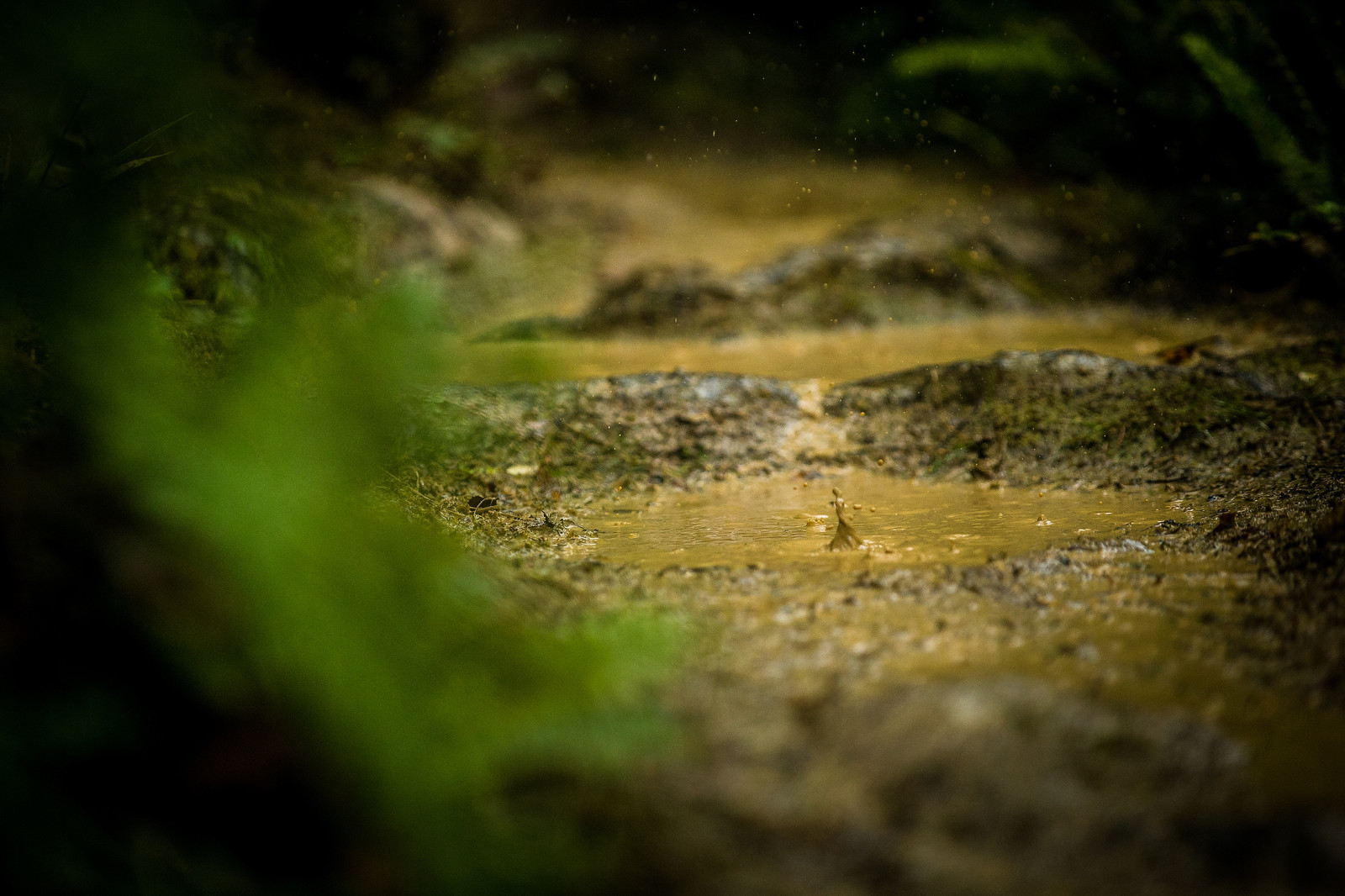 As wet as it gets - NZ Enduro Day 2 - Mountain Biking Pictures - Vital MTB
