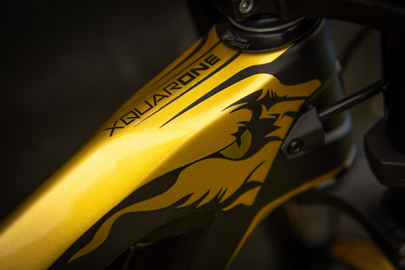 Eyes on the Prize - WORLD CHAMPS BIKES - Mick & Tracey Hannah's Polygons - Mountain Biking Pictures - Vital MTB