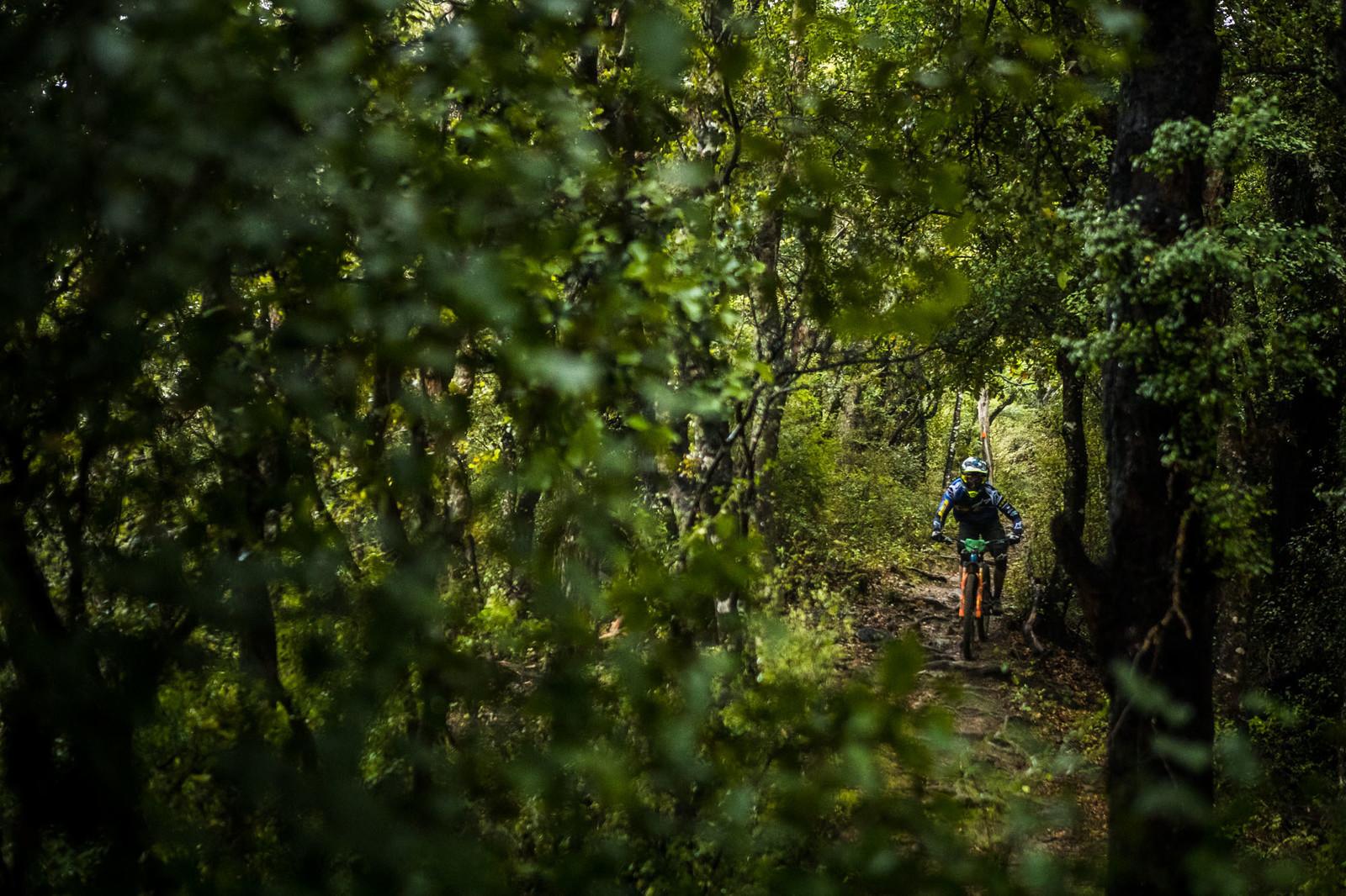 NZEnduro19 BB AS6I0101 - 2019 NZ Enduro Day 1 Photo Gallery - Mountain Biking Pictures - Vital MTB