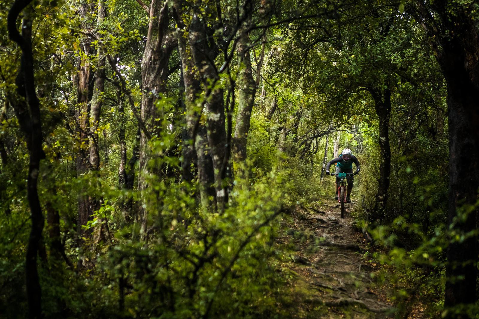 NZEnduro19 BB AS6I0126 - 2019 NZ Enduro Day 1 Photo Gallery - Mountain Biking Pictures - Vital MTB