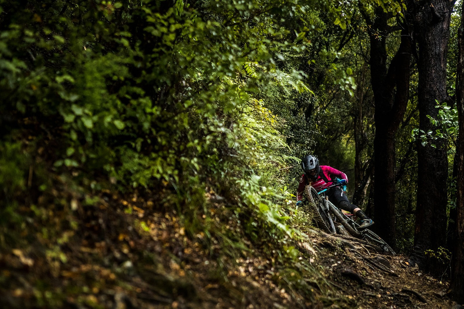 NZEnduro19 BB AS6I0439 - 2019 NZ Enduro Day 1 Photo Gallery - Mountain Biking Pictures - Vital MTB